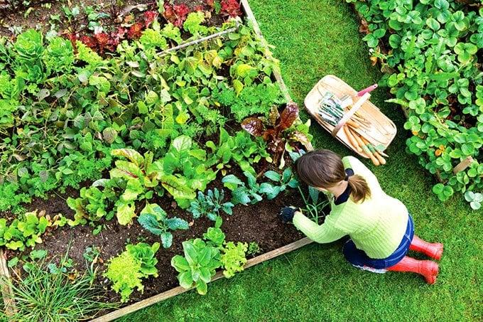 vegetable gardening secrets | highly profitable vegetable garden https://organicgardeningeek.com