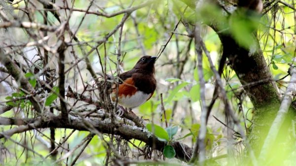 birding - All about sustainable and organic gardening tips and tricks. 2021 - the man who lived 28 thousand years ago,Cro-Magnon rock shelter - https://organicgardeningeek.com/man-who-lived-28-thousand-years-ago/