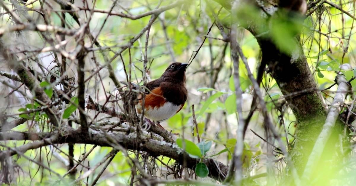birding - All about sustainable and organic gardening tips and tricks. 2021 - https://organicgardeningeek.com/tag/bird-watching/