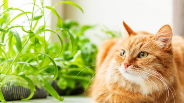 cat - All about sustainable and organic gardening tips and tricks. 2021 - How to Make Vegetables Taste Like Meat,make vegetables meat like,meat like vegetables,vegetables taste meat like - https://organicgardeningeek.com/how-to-make-vegetables-taste-like-meat/