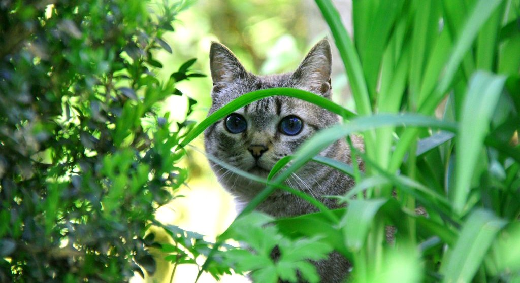 Keep Cats Away From Plants Outside