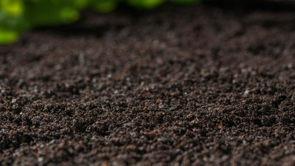 soil analyse - All about sustainable and organic gardening tips and tricks. 2021 - gardening journal,Keeping a gardening journal,How to keep a gardening journal,How to make a gardening journal - https://organicgardeningeek.com/keeping-a-gardening-journal/