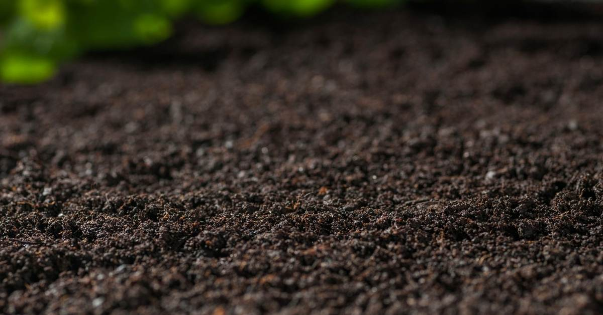 soil analyse - All about sustainable and organic gardening tips and tricks. 2021 - https://organicgardeningeek.com/tag/when-to-grow/