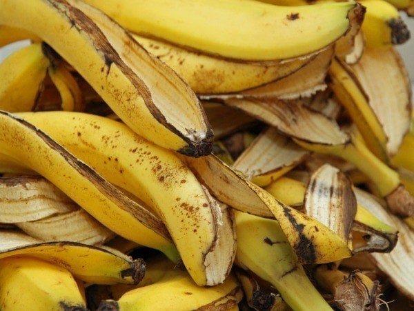 banana peels - All about sustainable and organic gardening tips and tricks. 2021 - planting - https://organicgardeningeek.com/planting/page/4/