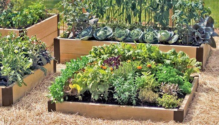 raised bed garden organicgardeningeek.com