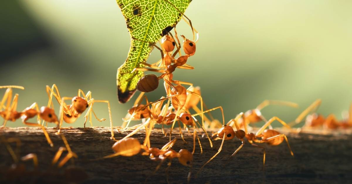 Ants - All about sustainable and organic gardening tips and tricks. 2021 - https://organicgardeningeek.com/tag/ants-fleas-pesticides/