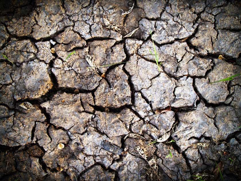 soil condition https://organicgardeningeek.com