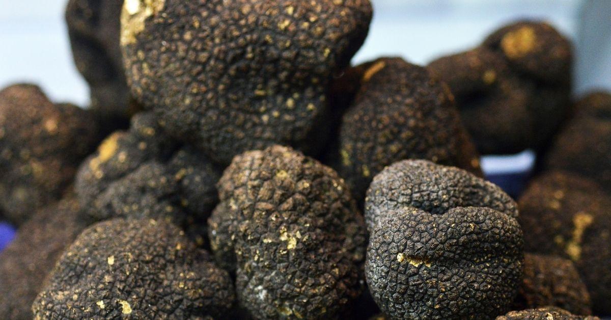How to grow truffles in my own backyard - starting truffle farming guide - How to prepare the soil for cultivating truffles? https://organicgardeningeek.com