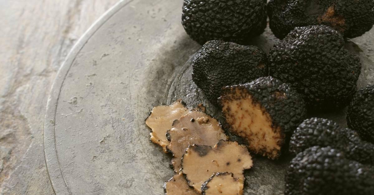 Beginners Guide To Growing Truffle easily https://organicgardeningeek.com