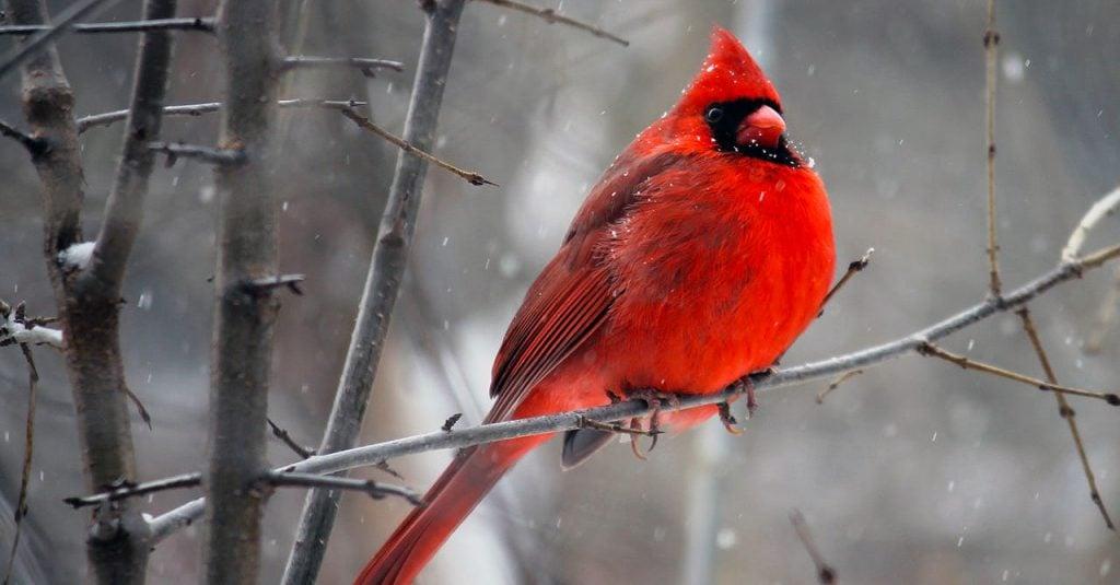 winter birding https://organicgardeningeek.com