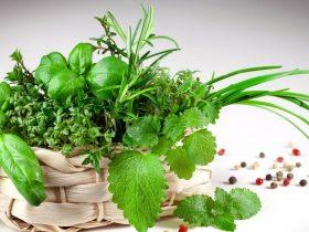 Basil herb plant - How to grow care and use basil https://organicgardeningeek.com