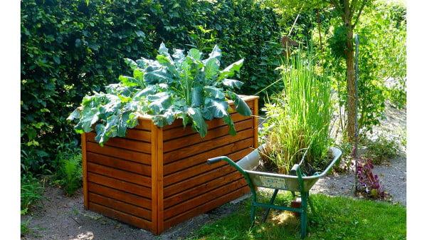 Raised bed gardening in june. you can still grow those fast growing plants in your garden in june https://organicgardeningeek.com
