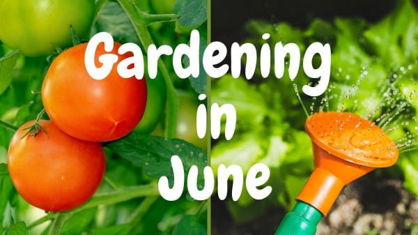 what to do in the gardens step by step https://organicgardeningeek.com
