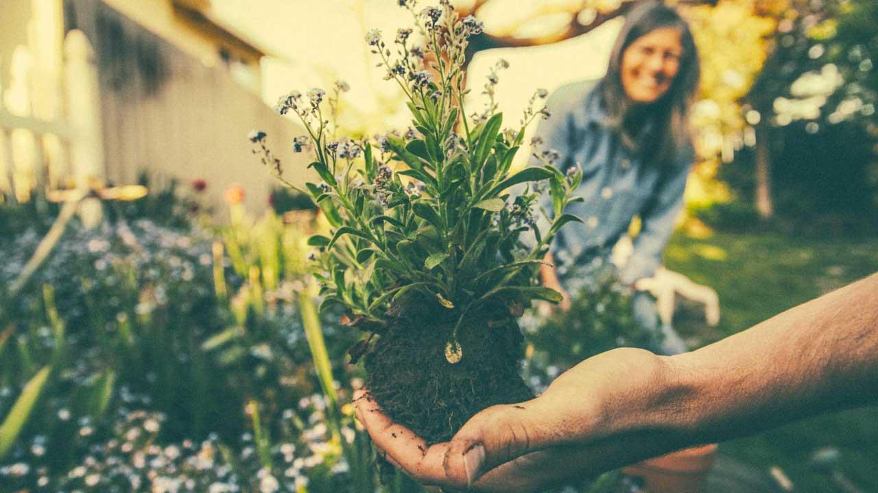 bur nfat and lose weight with gardening https://organicgardeningeek.com
