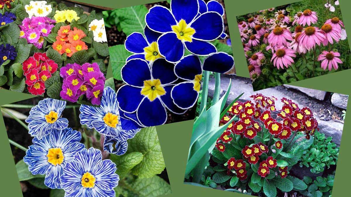 Plants that tolerate waterlogging https://organicgardeningeek.com