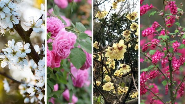 12 best hardy hedge plants with flowers for your garden https://organicgardeningeek.com