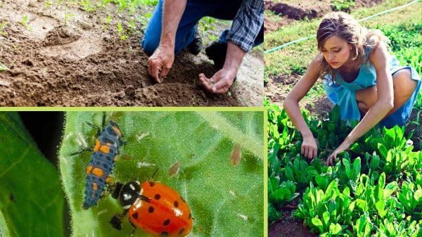 organic plant protection in the garden https://organicgardeningeek.com