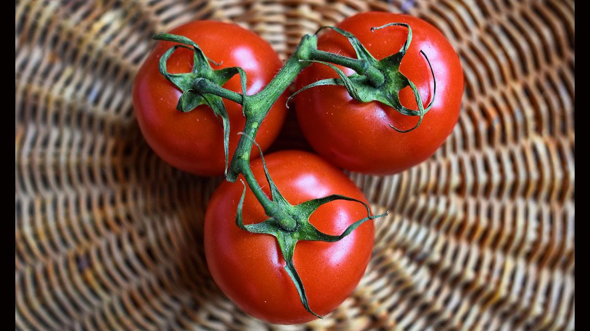 red russian tomato features https://organicgardeningeek.com