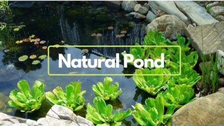 Making natural pond in the backyard https://organicgardeningeek.com