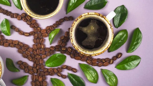 how to grow coffee indoors at home https://organicgardeningeek.com
