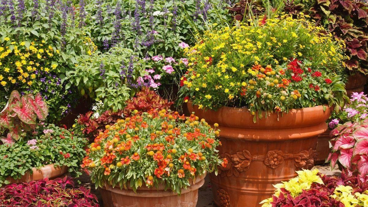 Container flower gardening tips and reasons for https://organicgardeningeek.com