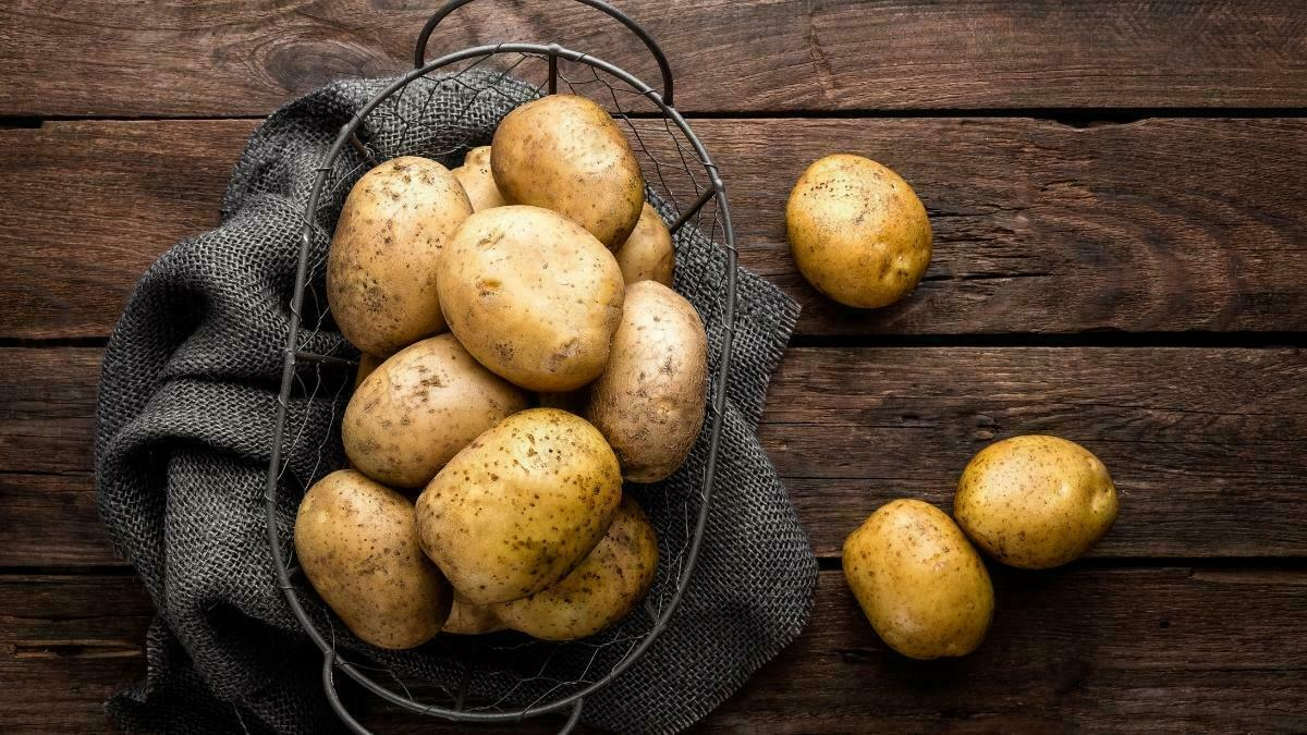Knowing how to grow potatoes indoors is an excellent idea for many reasons. The first is that the indoor gardener chooses the soil to grow these vegetables. https://organicgardeningeek.com