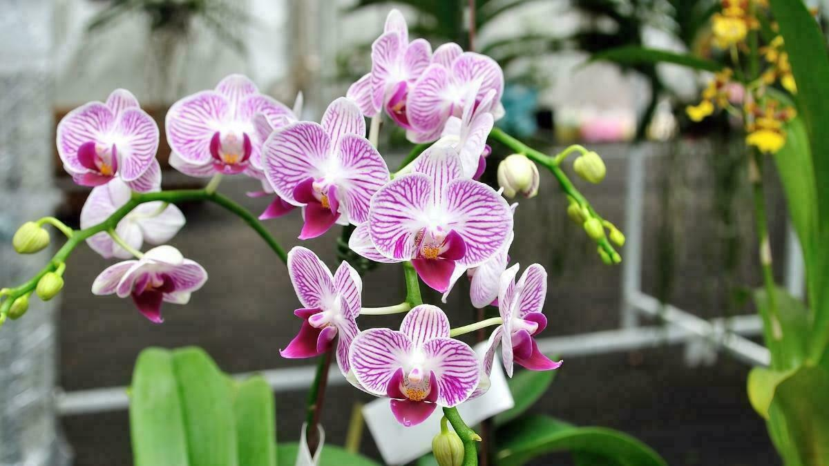 how to grow orchid plant indoors at home correctly https://organicgardeningeek.com
