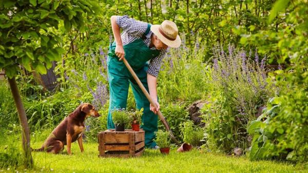 pet friendly gardening tips https://organicgardeningeek.com
