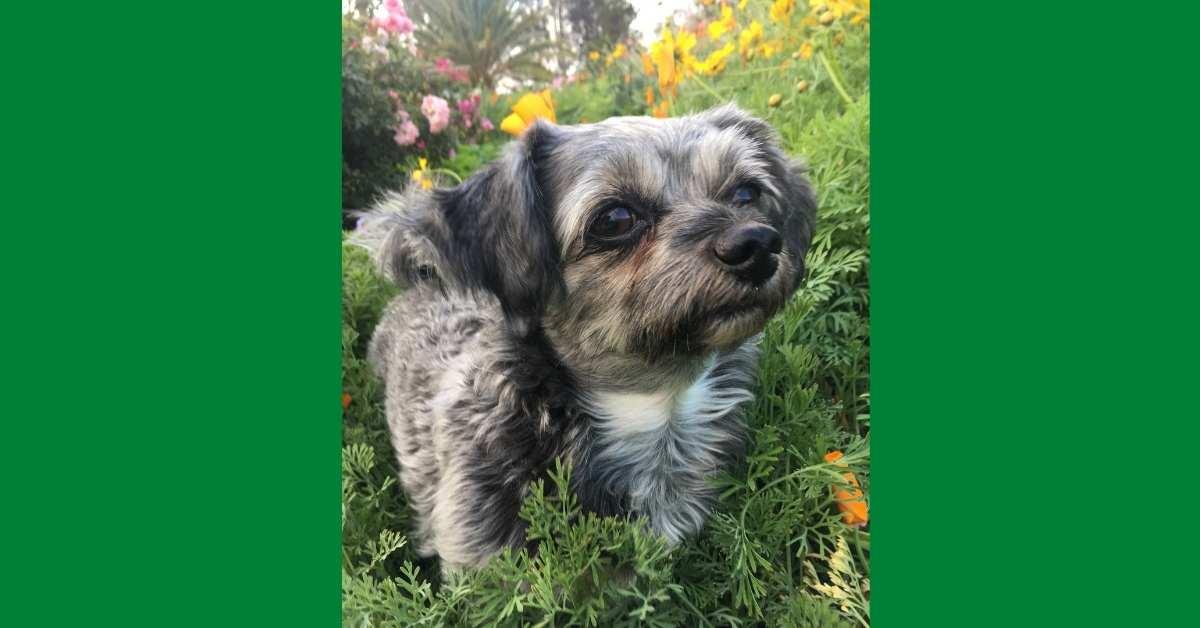 10 Pet Friendly Gardening Tips  https://organicgardeningeek.com