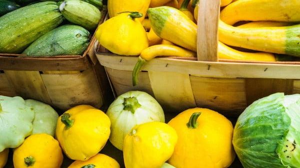 The best way to grow summer squash https://organicgardeningeek.com