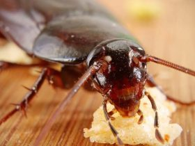 How to get rid of cochroaches at home https://organicgardeningeek.com