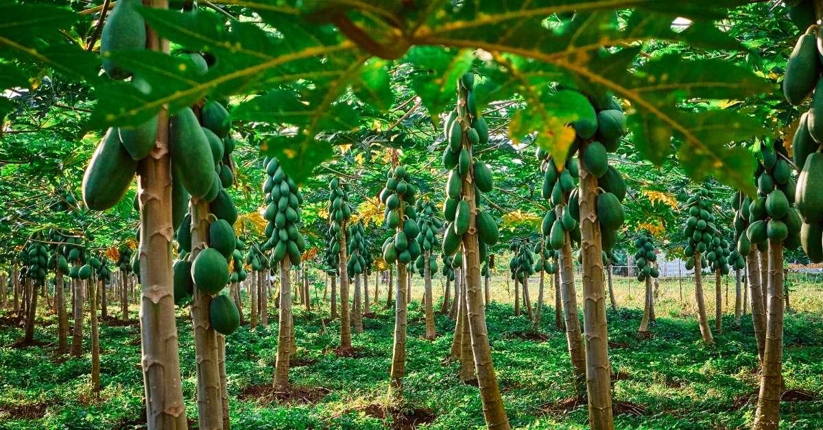 Best fruit trees to plant in my zone https://organicgardeningeek.com