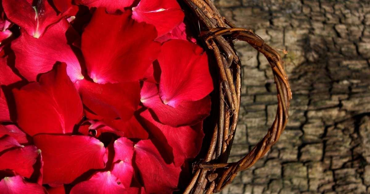 Edible rose petals https://organicgardeningeek.com