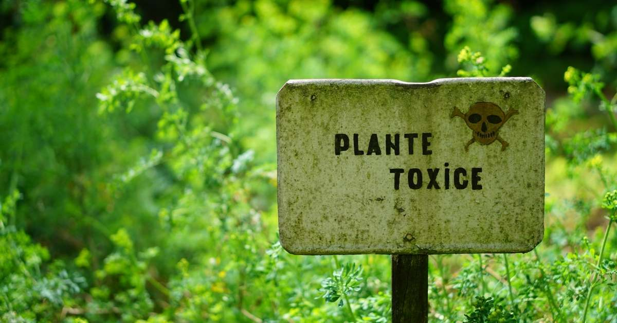 Avoid Toxic or Dangerous Plants https://organicgardeningeek.com