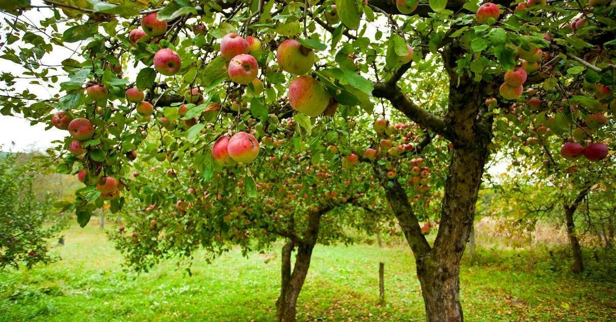 Fruit and Nut Trees to Grow in zone 5 to zone 9 https://organicgardeningeek.com