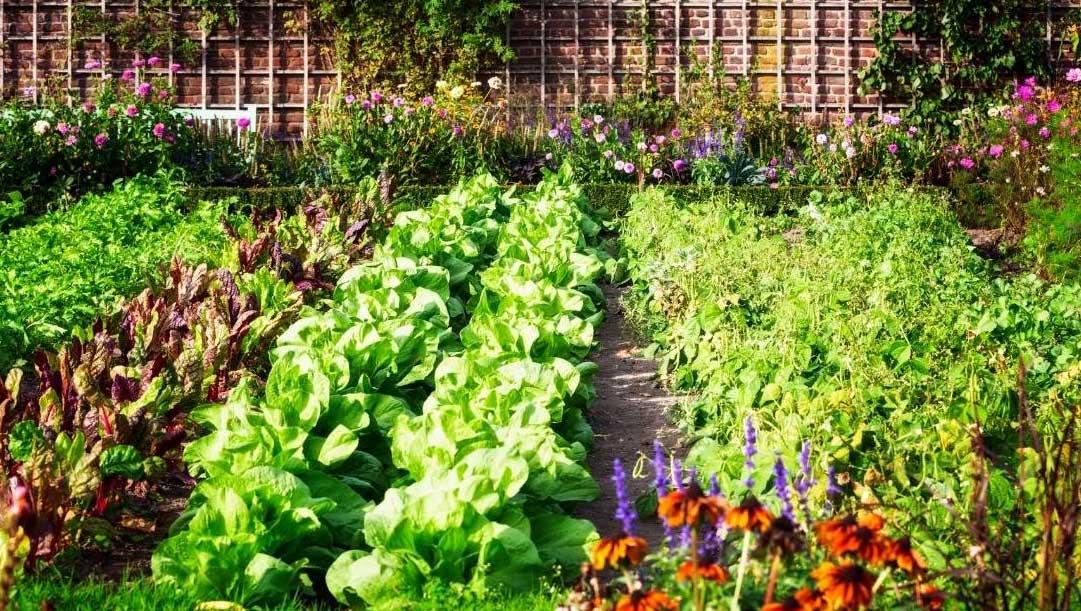 How to Start a Vegetable Garden From Scratch https://organicgardeningeek.com