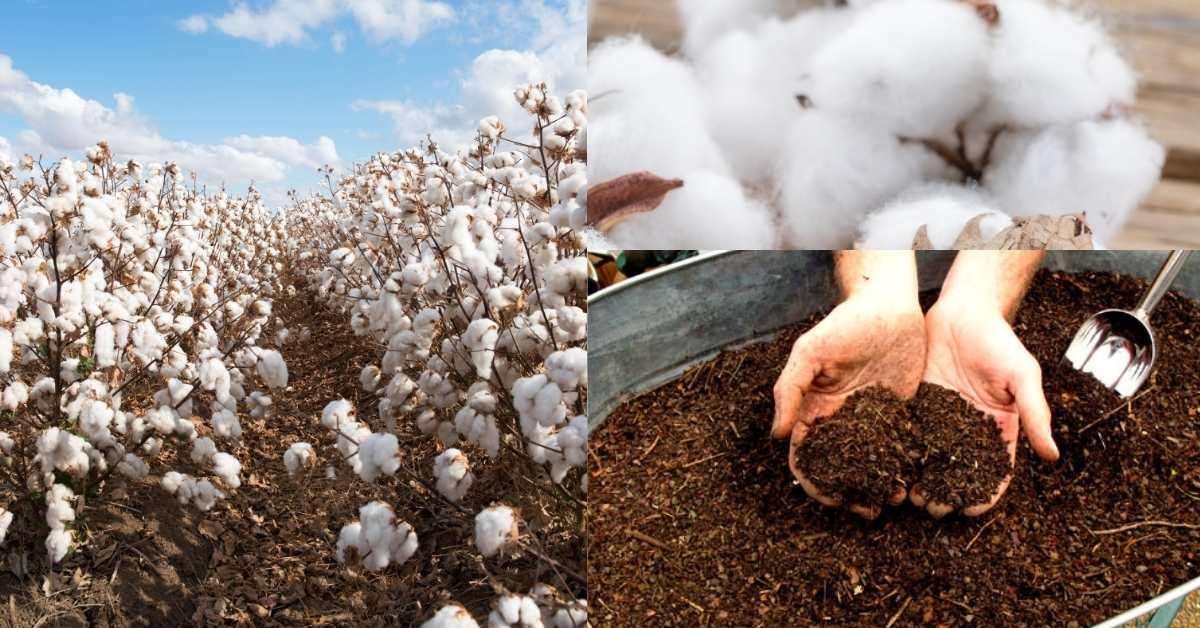 Cotton burr compost use as a mulch in your garden https://organicgardeningeek.com