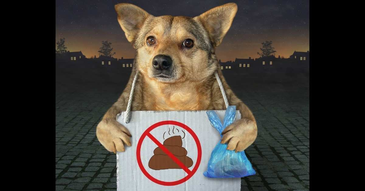 How to Stop Dogs Pooping on Your Lawn - how to stop dog urine from killing grass naturally https://organicgardeningeek.com