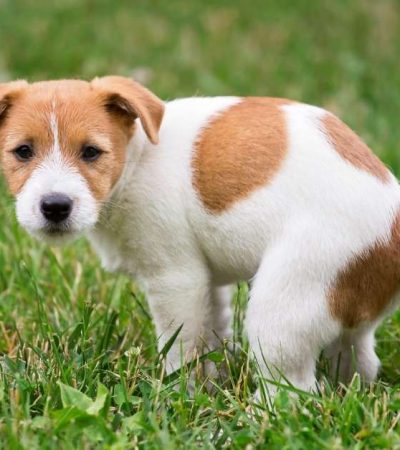 how to stop dogs pooing or urinating on your lawn or yard https://organicgardeningeel.com