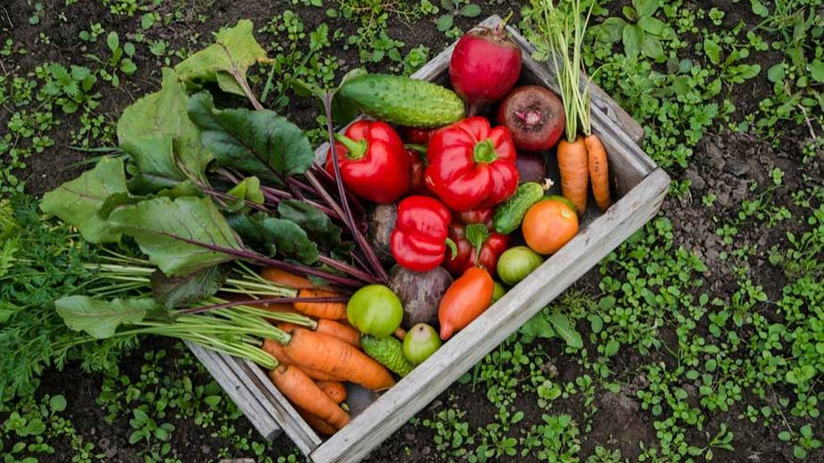 How to Start a Vegetable Garden From Scratch - here is the comprehensive guide for beginners on how to grow vegetables outdoors https://organicgardeningeek.com