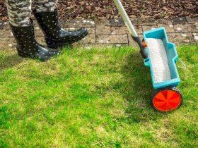 hwo to properly fertilize your lawn https://organicgardeningeek.com