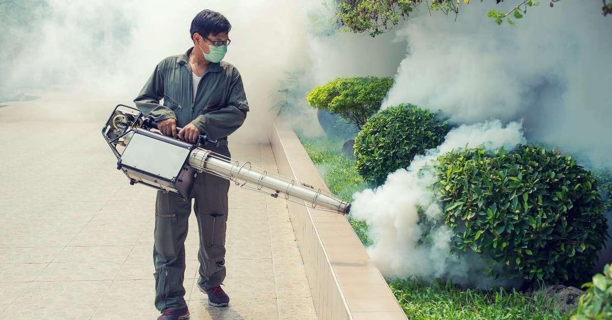 Garden Pest Control: Organic or Insecticide? https://organicgardeningeek.com