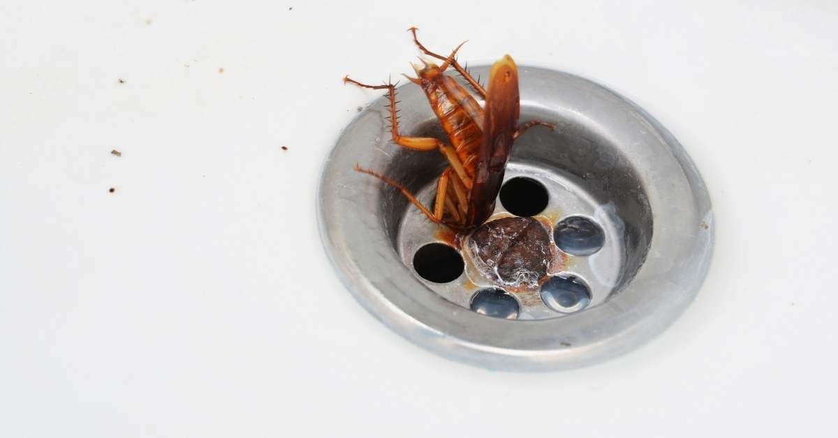 How to Get Rid of Roaches Now | The Ultimate Guide! https://organicgardeningeek.com