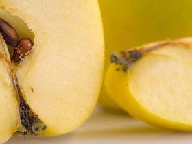Growing apple from seeds https://organicgardeningeek.com
