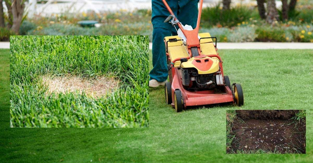 How to defer lawn grubs -How to Deal with Lawn Grubs easily https://organicgardeningeek.com