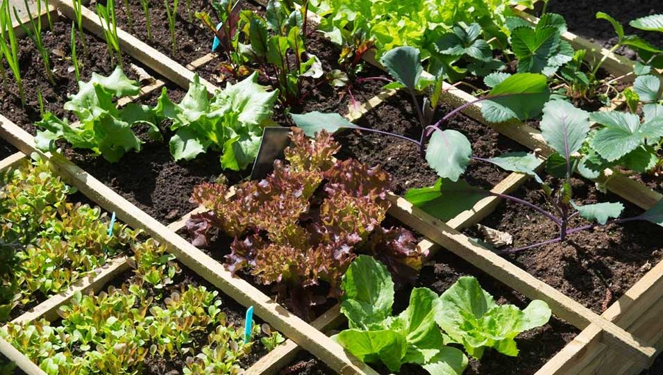 beginner guide for creating a vegetable garden indoors and outdoor https://organicgardeningeek.com