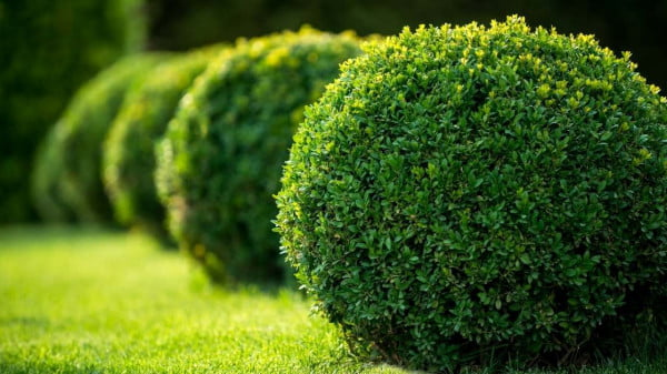 lawn care tips - All about sustainable and organic gardening tips and tricks. 2021 - Lawn Pests and Insects,lawn insects identification,lawn pests identification,organic lawning - https://organicgardeningeek.com/the-top-7-lawn-pests-and-insects-beware/