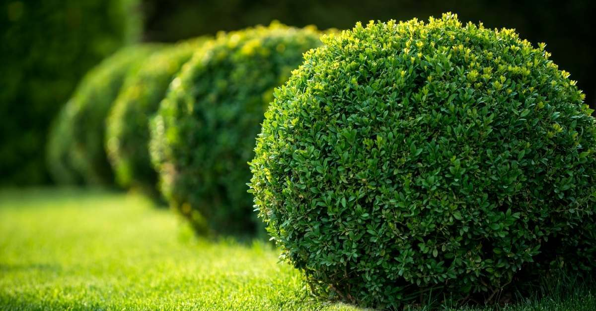 lawn care tips - All about sustainable and organic gardening tips and tricks. 2021 - Homeowner Lawn Care,first time homeowner lawn care,Watering During Summer,What is the best time for watering the lawns,Lawn Supplemental Watering - https://organicgardeningeek.com/homeowner-lawn-care-watering-during-summer/