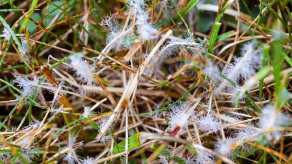 How to get rid of lawn fungus https://organicgardeningeek.com