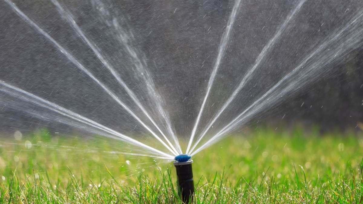watering lawns properly https://organicgardeningeek.com